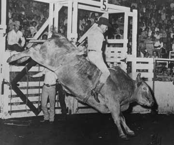 Ken Roberts winning 1st place in bull riding - 1966, Tulsa, OK